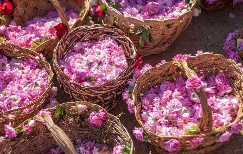 bulgaria rose festival tour kazanlak